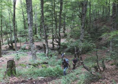 Albania_Trekiking_Forest